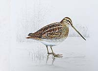 Ronald Bevan - Norfolk Snipe