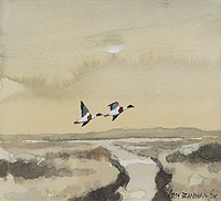 Hugh Brandon-Cox painting of Shell Duck Near Blakeney