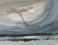 Hugh Brandon-Cox Pink Feet Geese Near Scolt Head