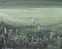 Hugh Brandon-Cox - Blakeney Marshes Avocets