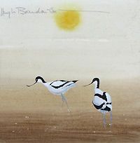 Hugh Brandon-Cox - Blakeney Avocets