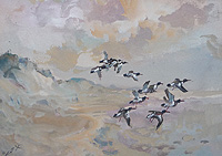 Oyster Catchers over Sand Dunes