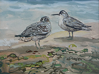 Norfolk Birds painting by Cox