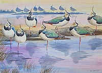 lapwings at Dusk Stiffkey