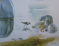Daphne Padden Lapwing painting for sale