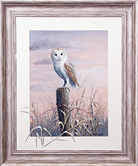 Barn Owl watercolour for sale