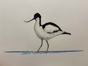 Avocet painting for sale