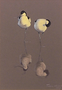 Julian Novorol  Avocets